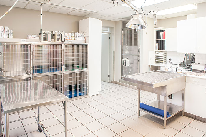 The Veterinary Clinic Forest Hill Animal Clinic
